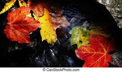 automne, ruisseau, boucle, hd