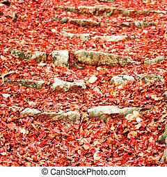 automne, saison, couleurs