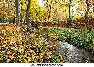automne, saison, parc, ruisseau