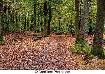 automne, scène, details., divers, forêt, feuillage