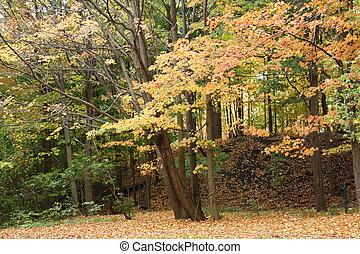 automne, sceneries, unique