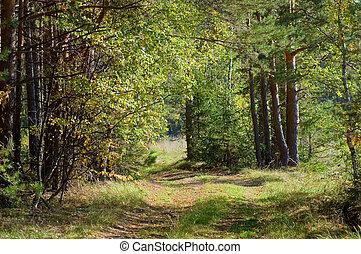automne, sentier, bois