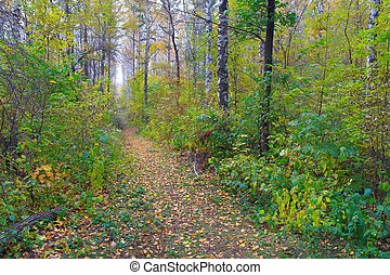 automne, sentier, forêt