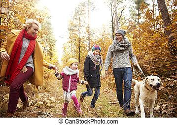 automne, sentier, forêt, promenade