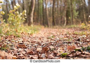 automne, sentier, gros plan, forêt