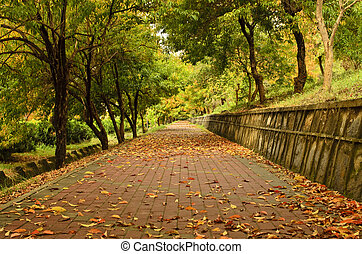 automne, sentier