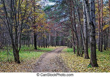 automne, sentier, marche, parc