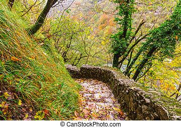 automne, sentier, pierre, forêt