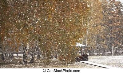 automne, snowfall., premier