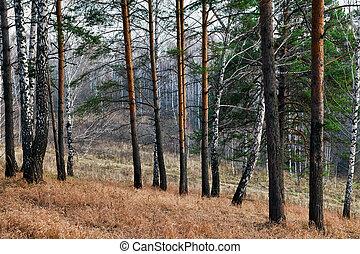 automne, soir, forêt