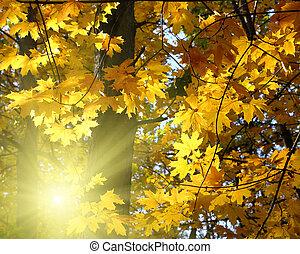 automne, soleil, feuilles, jaune