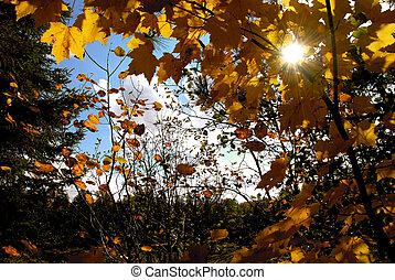 automne, soleil