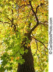 automne, soleil, par, feuillage
