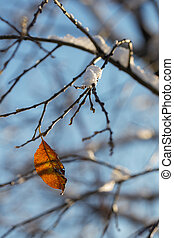 automne, solitaire, feuille