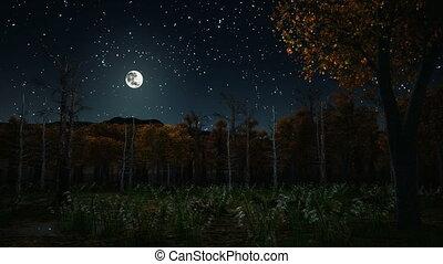 automne, sombre, hanté, 4k, nuit, forêt