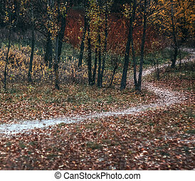 automne, style, jaune, forest., retro, sentier, paysage