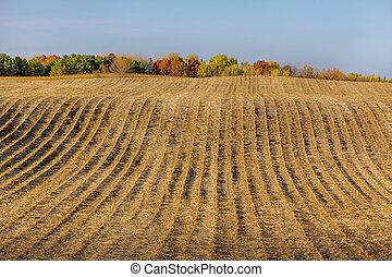 automne, tard, champ, sillonné, labouré