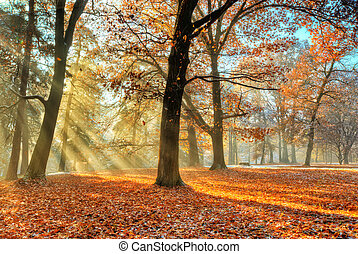 automne, tard, forêt, sunrays, matin