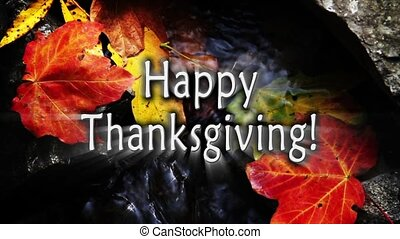 automne, thanksgivign, ruisseau, heureux