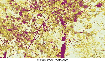 automne, tonalité sepia, coloré, feuilles