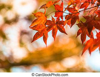 automne, très, foyer peu profond, feuilles