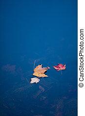 automne, trio