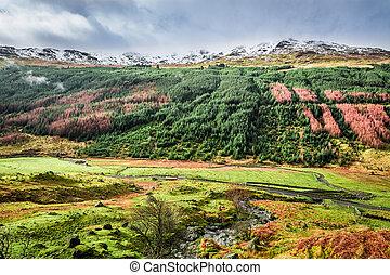 automne, vallée, ecosse, montagnes