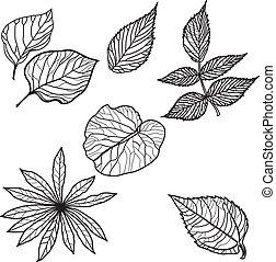 automne, vecteur, ensemble, pousse feuilles