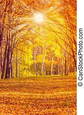 automne, vendange, feuilles, fond, nature