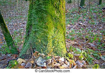 automne, vert, écorce, arbre, mousse