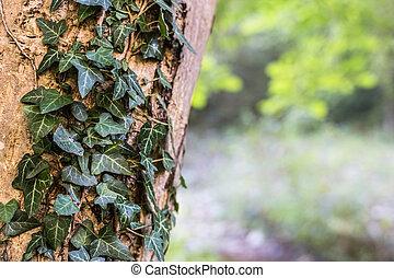 automne, vert, couleurs, arbre, lierre