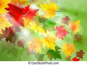 automne, vibrant, feuille, érable, fond