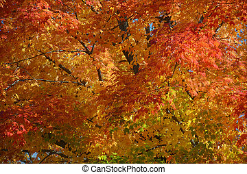 automne, vibrant, minnesota, feuillage, pic