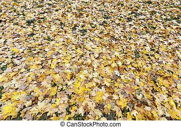 automne, vieux, feuillage