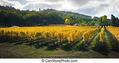 automne, vignes