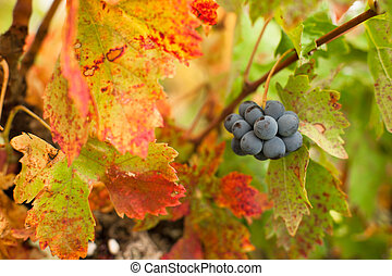 automne, vignoble