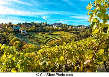 automne, vignoble, règlement, maisons