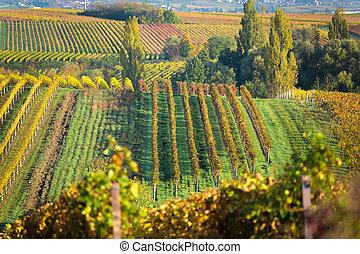 automne, vignobles, allemagne, pfalz