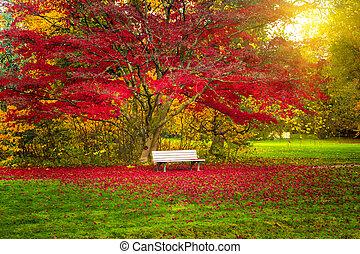 automne, ville, park., paysage, banc