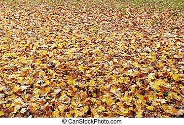 automne, y, terrestre, baissé, couvert
