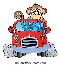 automobile, scimmia