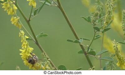 autour de, mouches, hony, fleurs, abeille