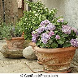 autre, vases, cour, toscan, terre cuite, hortensia, fleurir, usines