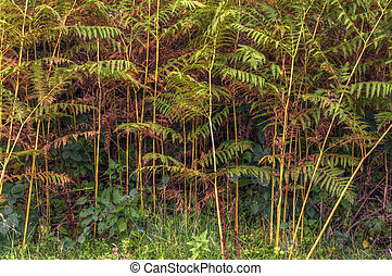 Auttumn forest scene detailing changing life cycle of ferns
