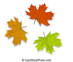 Autum Background with 3 colorful fall leaves
