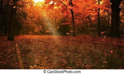 autum, blad, herfst