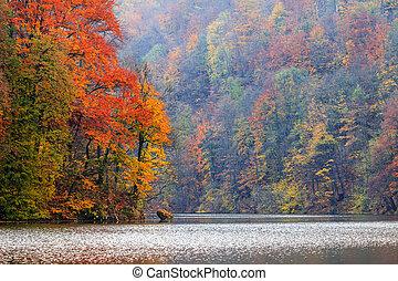 Autum forest lake Hamori