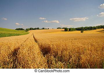 Autum golden field landscape