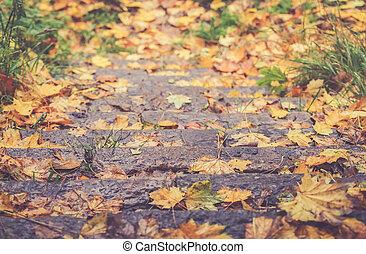 Autum leaves fallen on a stairway