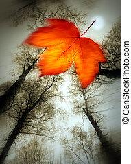 Autum leaves against sky